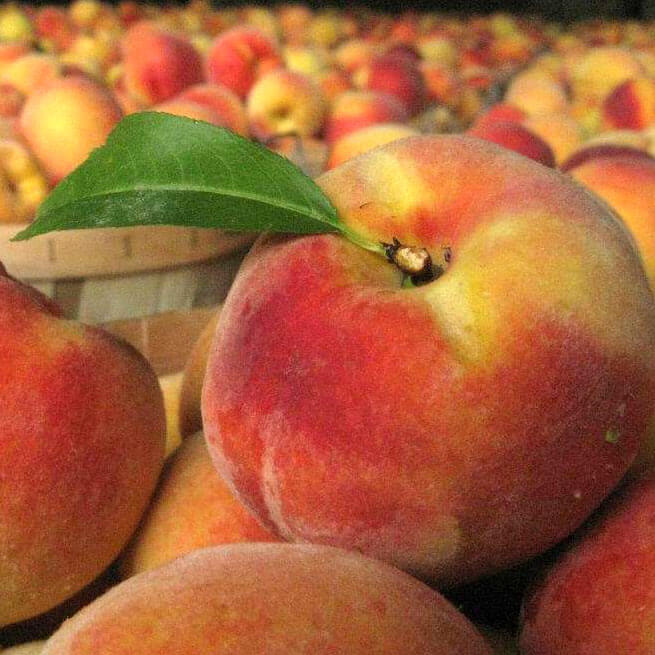 Honey Bear Orchards