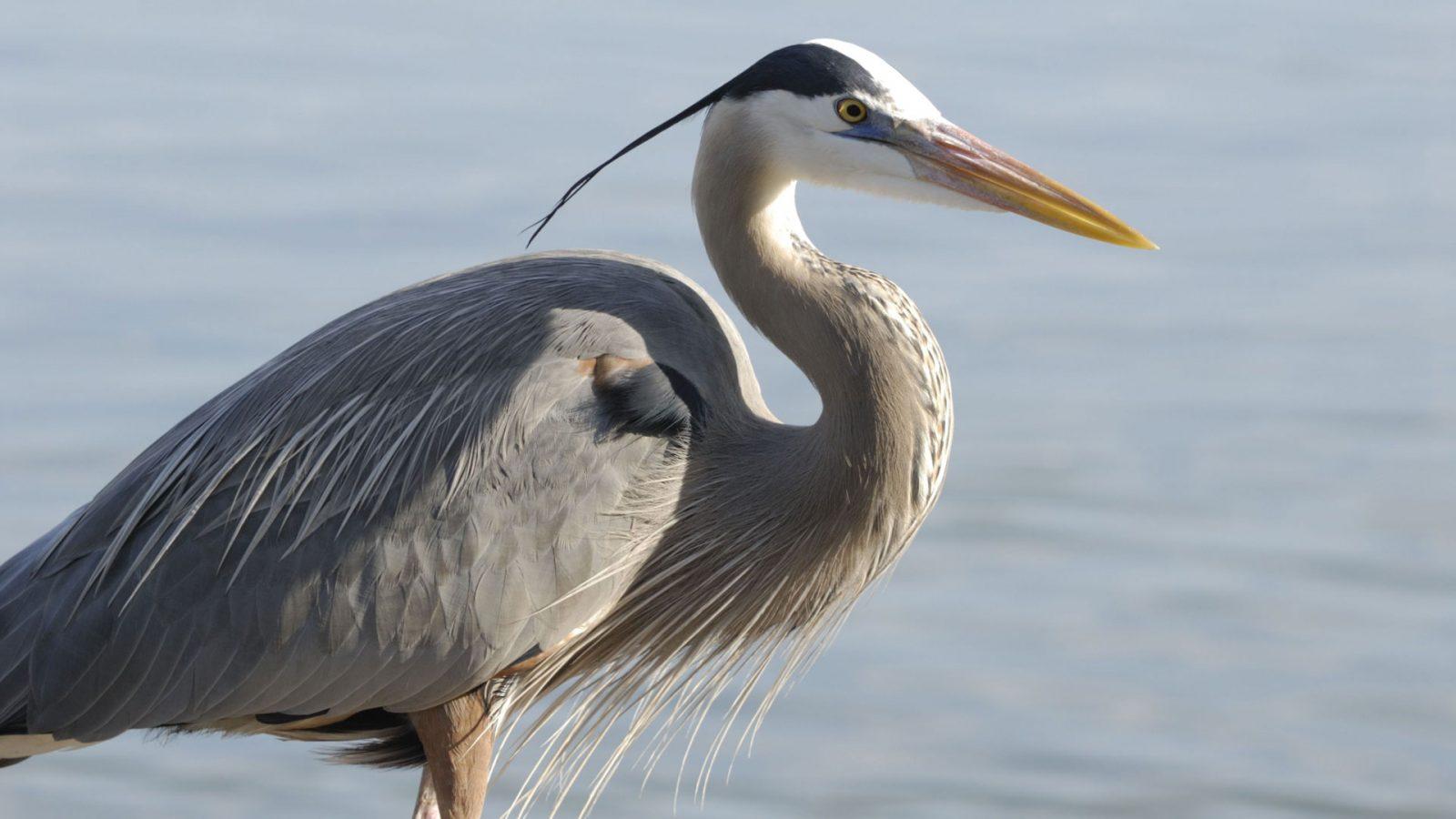 Bird Watching at Middle Creek